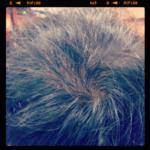 増毛メニューのよくある質問(ボリュームアップ・エクステ)